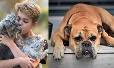 सड़क के कुत्ते की कैसे करें देखभाल | Best Tips To Care For A Stray Dog -  Hindi Boldsky