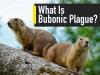 What Is Bubonic Plague? Causes, Symptoms, Treatment