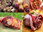 Uses Of Dry Rose Petals