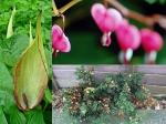 Flower Plants India Garden
