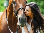 Fascinating Facts About Horses That You Didnt Know