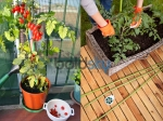 Gardening Tips For Cherry Tomatoes