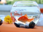 Top Five Myths About Aquariums