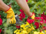 Gardening Tips For Hot Weather