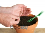 Five Best Gardening Tips For Planting Seeds