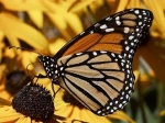 Steps To Start A Butterfly Garden