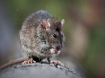 How To Keep Mice Away From Your Garden