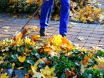 Ways To Prevent Mosaic Viruses From Your Garden