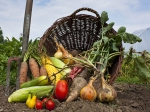 Incredible Health Benefits Of Going Organic