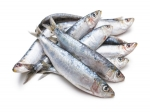 Five Reasons Why Sardines Are Must Have