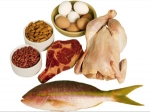 Why Protein After A Workout? - Protein Food Benefits