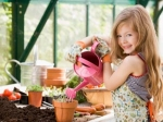 Tips To Have An Indoor Garden