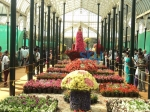 Lalbagh Flower Show 2014: Pics