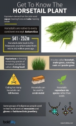 Lesser Known Benefits Of Horsetail For Health, Hair & Skin