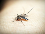 Malaria Parasites Become Resistant To Anti-malaria Drugs: Result Failure In Treatment