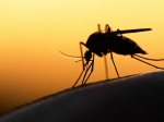 'Malaria No More India' Launches 'India Against Mosquito' Campaign