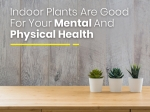 Did You Know That Indoor Plants Are Good For Your Mental And Physical Health?