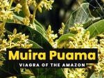 11 Health Benefits Of Muira Puama