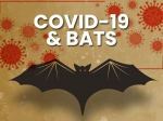 Why Bats Themselves Don't Get Infected By Viruses?