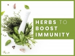 10 Best Kitchen-Friendly Herbs To Boost Immunity During COVID-19