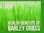 15 Amazing Health Benefits Of Barley Grass