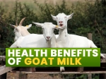 Goat Milk: Nutrition, Health Benefits And How To Use