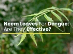 Are Neem Leaves An Effective Remedy To Treat Dengue Fever?