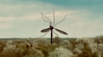 All You Need To Know About Mosquirix, The First Vaccine For Malaria Approved By The WHO