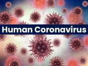 What Is Human Coronavirus?