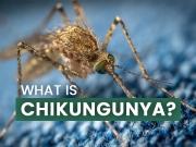 What Is Chikungunya?