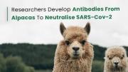 Alpaca Antibodies For COVID-19
