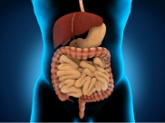 All You Need To Know About Inflammatory Bowel Disease