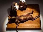 Have You Heard About This Disgusting Food Museum In Sweden?