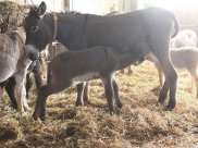 Everything You Need To Know About Donkey Milk Soap