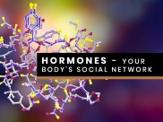 Know From A Nutritionist About Hormones: Your Body's Social Network