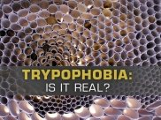 Repulsed By Honeycomb? Soap Bubbles? Lotus Stem? You May Have Trypophobia (Fear Of Holes)