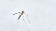 Government Asks States To Stress On Acceleration Of Prevention Activities For Vector Diseases Like Dengue