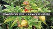 How Ashwagandha Helps Manage Diabetes