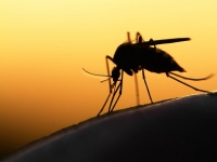 Who Are More At Risk Of Contracting Malaria? Read To Know More