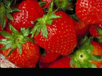 Strawberries Sale