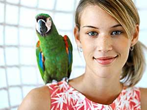 Top 4 Pet Birds For Home Boldsky Com