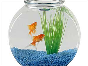 Tips For Setting Up An Aquarium