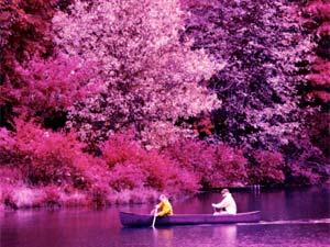 National Pink Day Interesting Facts Boldsky Com