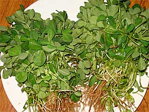 Nutritional Benefits Of Fenugreek Leaves