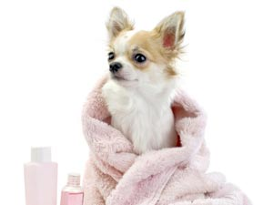 Common Winter Health Problems Of Dogs!