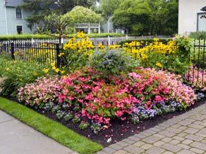 5 Easy To Grow Flower Plants Boldskycom