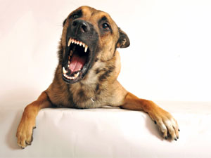 The Top 5 Most Dangerous Dog Breeds!