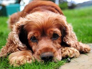 Top 5 Versatile Dog Breeds