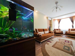 6 Places At Home To Keep Fish Tanks!