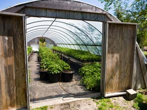 How To Make A Greenhouse In Your Garden?
